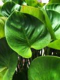 与水下落的绿色叶子纹理在自然本底 免版税库存照片