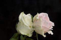 与水下落的美丽的五颜六色的玫瑰关闭  库存图片