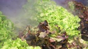 与水凉快的薄雾的喷洒的蔬菜沙拉在改善水合作用的超级市场 Mistcooling mashine 影视素材