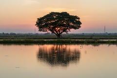 与水反射日落的一棵大树 免版税库存照片