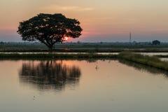 与水反射日落的一棵大树 免版税库存图片