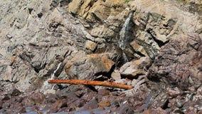 与水和波浪的注册岩石 影视素材