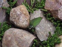与水和装饰青苔下落的郁金香在石头 库存照片