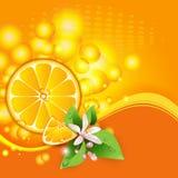 与水多的片式的背景橙色果子 皇族释放例证