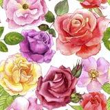 与水彩图画玫瑰的无缝的样式 向量例证