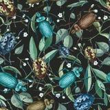 与水彩甲虫、分支和花的无缝的样式 库存图片