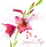 与水彩百合的花卉背景 库存照片
