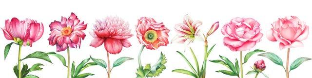 与水彩红色和桃红色牡丹的背景,上升了,鸦片和孤挺花花 库存照片