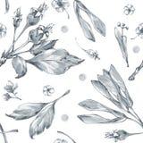 与水彩花和草本的无缝的样式 鱼 植物的纹理 单色 库存照片