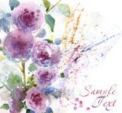 与水彩菊花的花卉背景 免版税库存照片