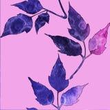 与水彩蓝色和桃红色叶子的无缝的样式 库存例证