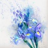与水彩虹膜的花卉背景 免版税库存图片