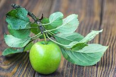 与水滴和叶子在木桌上,宏指令的一个成熟绿色苹果在选择聚焦 免版税图库摄影