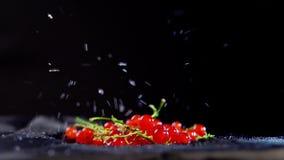 与水滴的成熟无核小葡萄干莓果移动反对黑背景 影视素材