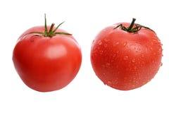 与水滴的成熟,被洗涤的开胃和鲜美红色蕃茄在白色的隔绝了背景 免版税库存图片