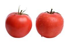 与水滴的成熟,被洗涤的开胃和鲜美红色蕃茄在白色的隔绝了背景 免版税库存照片