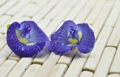 与水滴的蝴蝶豌豆热带花在竹席子的 图库摄影