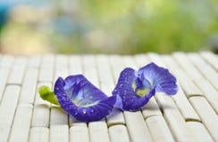 与水滴的蝴蝶豌豆热带花在竹席子的 免版税库存图片