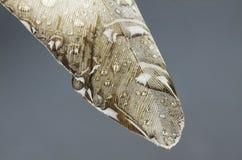 与水滴高分辨率宏观摄影的羽毛 免版税图库摄影