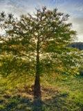 与池塘的后面被点燃的阳光树 免版税库存图片
