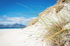 与沙丘、高草和蓝天的晴朗的海滩 免版税库存图片