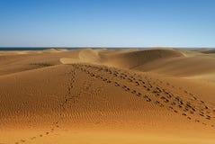 与沙丘的海岸线 免版税库存图片