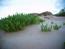 与沙丘的海滩 免版税库存图片