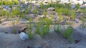 与沙子、石头和植物的背景 免版税库存图片