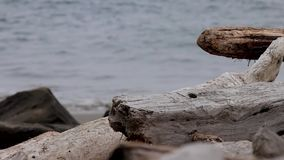 与沙子和岸的漂流木头分支在夏天 影视素材
