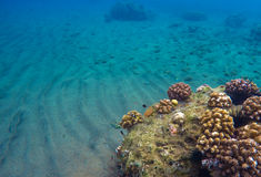 与沙子和珊瑚礁的水下的风景 热带海蓝色净水  库存照片