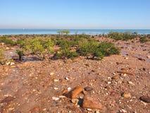 与沙子岩石、美洲红树和海洋的海滩东部点储备的 免版税库存图片