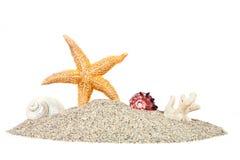 与沙子海星和壳的海滩 免版税库存照片