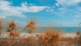 与沙子海滩的干草 图库摄影