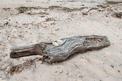 与沙滩的漂流木头 免版税库存图片