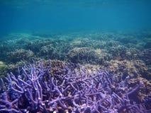与没人的紫色珊瑚海运 免版税库存图片