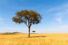 与没人的风景树在非洲 免版税库存照片