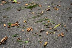 与沥青、秋叶和草的背景 免版税图库摄影