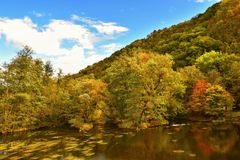 与河和五颜六色的树的美好的秋天风景在日落的一个森林里 塔亚河谷国家公园奥地利 免版税库存图片