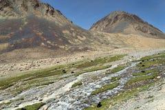 与河和牦牛的山风景 库存照片