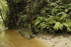 与河和蕨的婆罗洲雨林 免版税图库摄影