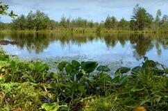 与河和绿草的夏天风景 免版税库存照片