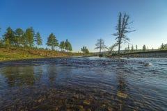与河的夏天风景、多云天空、森林和草和花 免版税库存图片