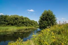 与河的夏天风景在俄罗斯 前重点 库存照片