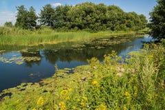 与河的夏天风景在俄罗斯 前重点 库存图片