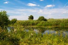 与河的夏天风景在俄罗斯 前重点 免版税库存照片