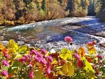 与河的明亮的桃红色花在背景中 免版税图库摄影