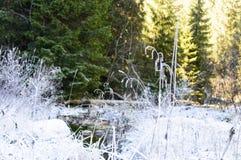 与河的秋天风景在冷淡的天 图库摄影