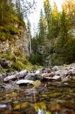 与河的足迹通过秋天森林 免版税库存照片