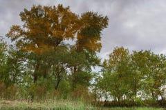 与河边的图象的风景 图库摄影