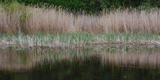 与河边的图象的风景 库存图片